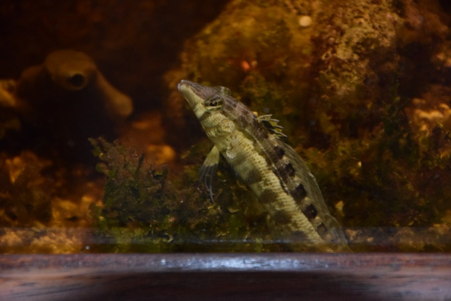 Le nouveau bac du Poissonpané : aquaterrarium de 900L / Nouvelle Calédonie - Page 2 928850DSC0001