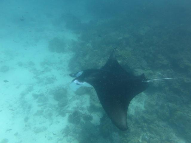 Quelques photos de mes dernières vacances (Maldives) 929171IMG4053