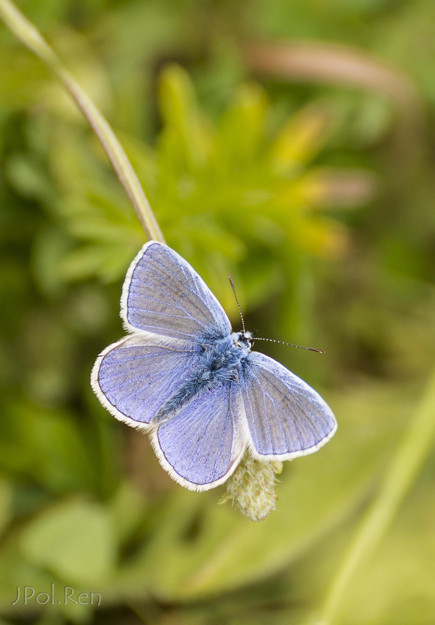 Bleu, bleu, azuré. 929201GE21pap0604