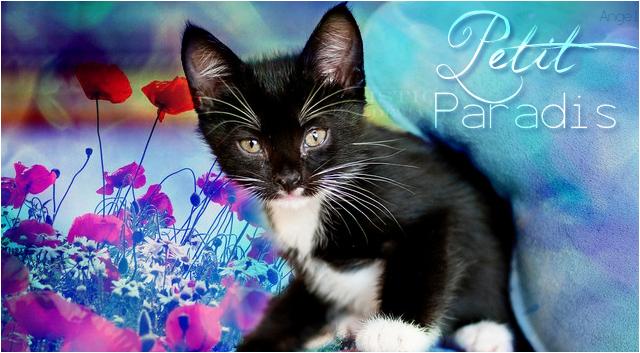 Petit Paradis => Mâle => Léopard [ Non libre pour l'instant ] 930309PetitParadis