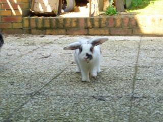 Nina, lapine bélier, née en aout 2011 - Page 8 936355P1160609