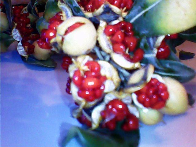 Pittosporum- un vert tendre  et une belle floraison 936769864