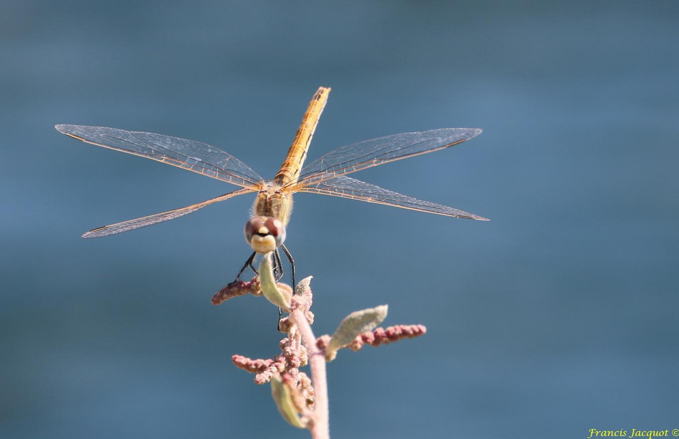 Insectes et Proxi. [Fil Ouvert] 93935145L1