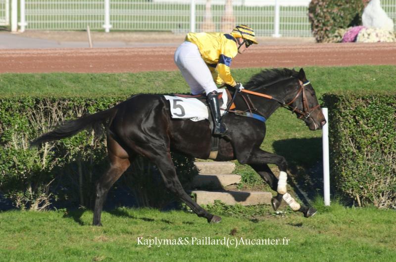Photos Enghien 22-10-2016 Grand Steeple 9427555J6A9403