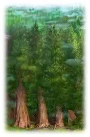 Forêt Ancestrale