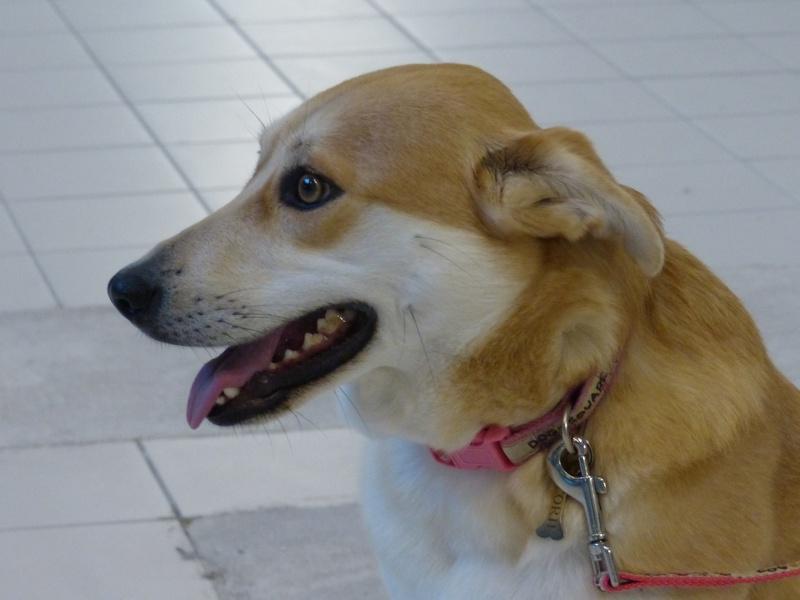 Corie, femelle, 3 mois, joli croisement, très sociable - 7 octobre 2011 - Page 2 945967P1040625