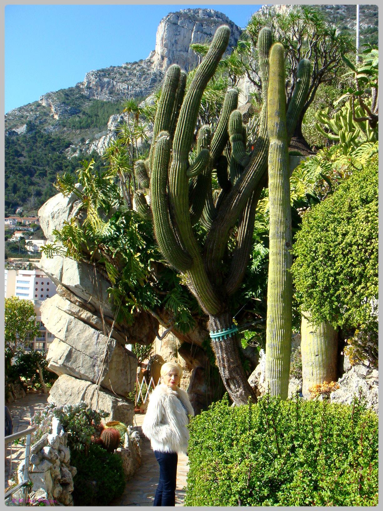 Ballade à Monte-Carlo, Monaco et environs.  950953DSC012198