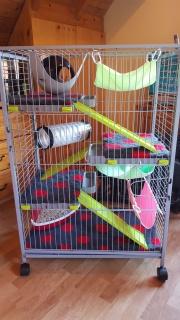 vente cage maxi loft rongeurs et accessoires divers 60 € 95121420161027165416