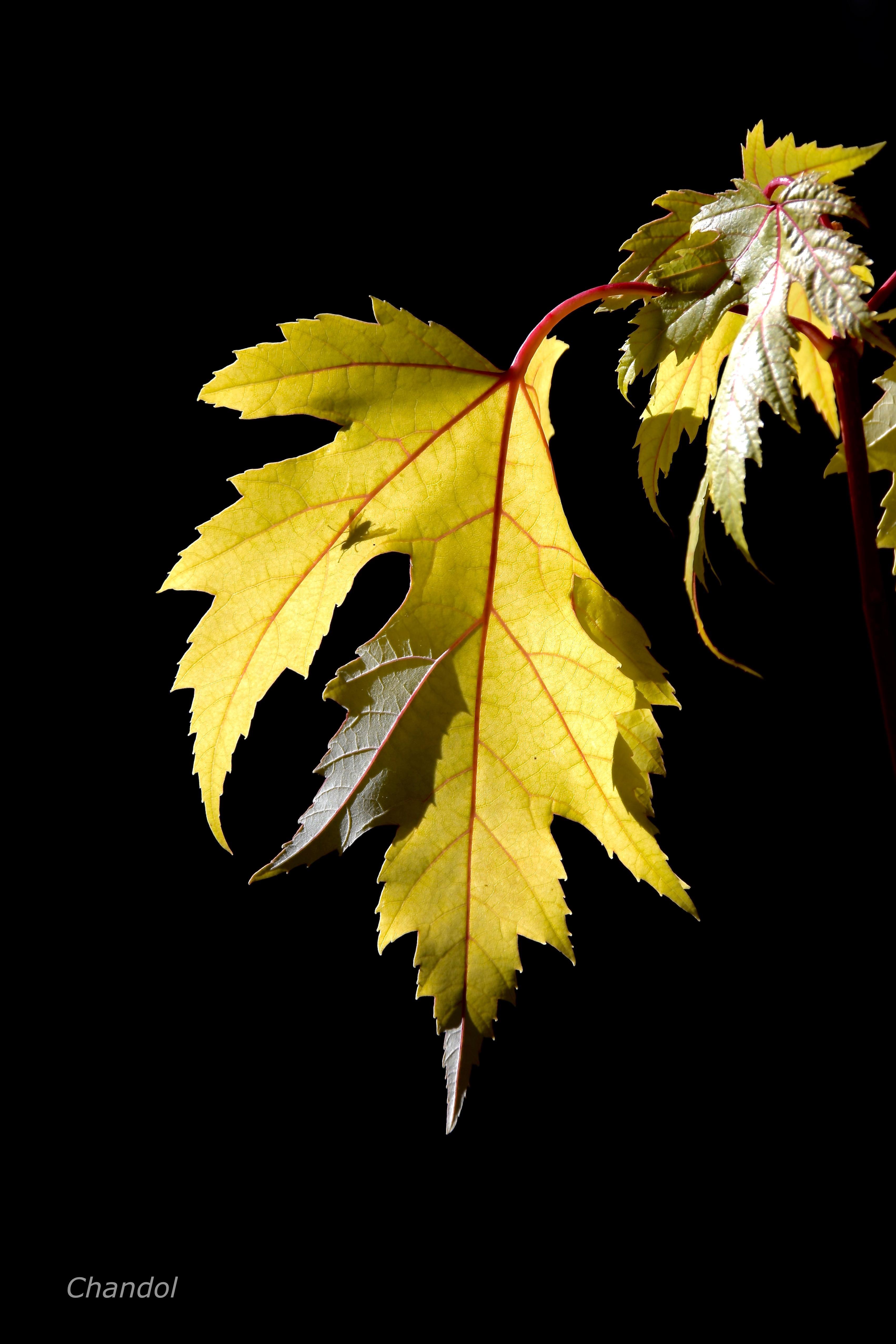 Lumière d'automne 954152DSC00171