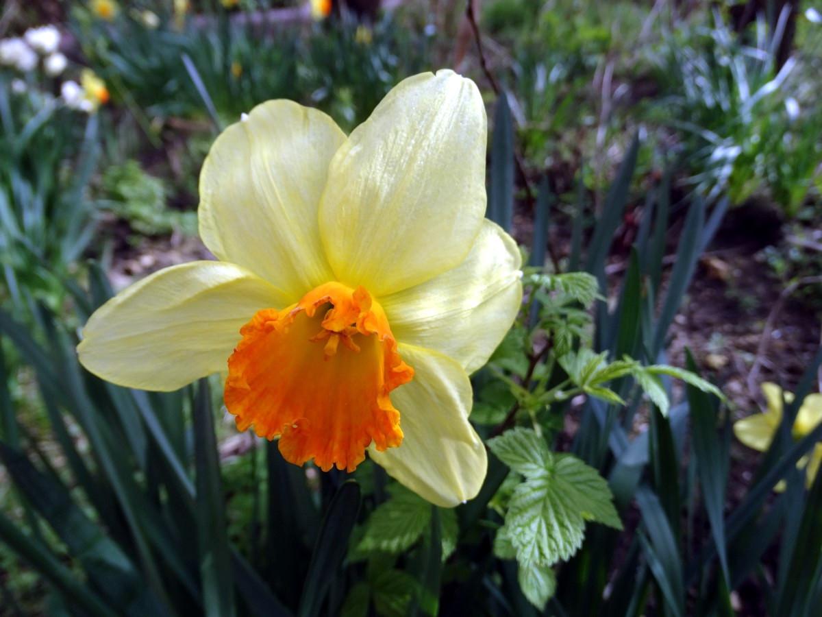 [Fil Ouvert] Fleurs 955665018Copier