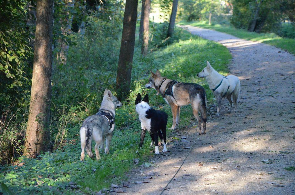 border - L'éducation de ma chienne, Jeune border collie - Page 2 957592DSC2271
