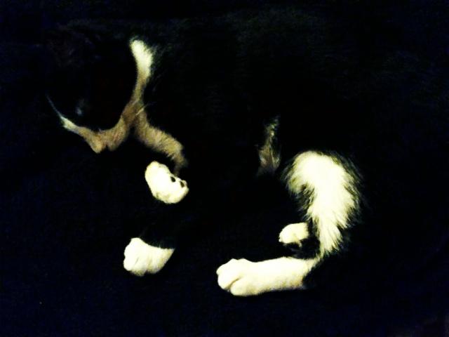 Louzey, mâle, 02.2015, noir et blanc 965514louzeydecheschire