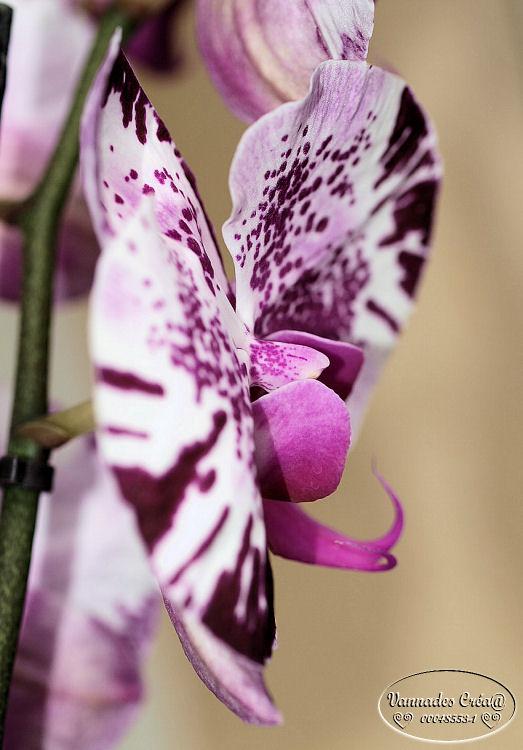Mes Orchidées et Moi 970510702