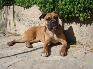 Ici venez remplir la fiche d'identité de votre chien avec sa photo à la suite des autres chiens du forum 972910photo_47