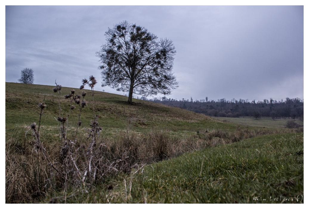 Découverte du plateau de Malzéville [Maj 02/04/2013 - Lever de soleil glacial] 973551yryg16
