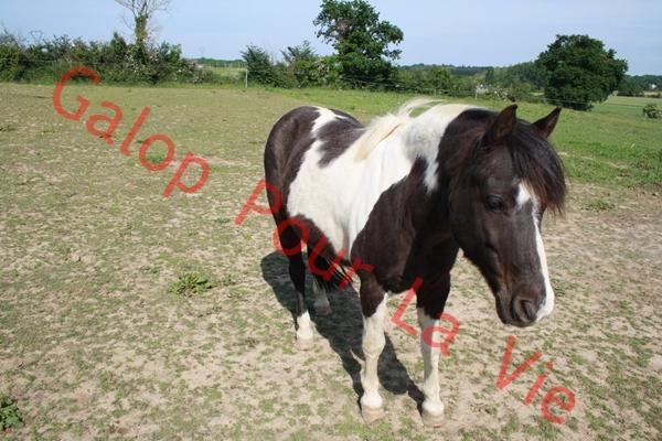 LOONY -  ONC poney né en 2001 - Adopté en juin 2011 par Carole 975484IMG4897