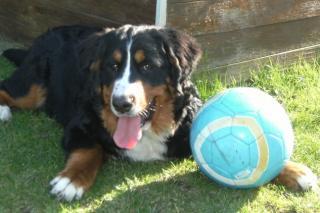 Ici venez remplir la fiche d'identité de votre chien avec sa photo à la suite des autres chiens du forum 976526retour20