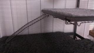 A vendre : Extension 163 Cage Critter Nation Midwest pour la 161 976661Cagephotodelinte769rieur