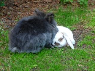 Nina, lapine bélier, née en aout 2011 - Page 8 985280P1160826