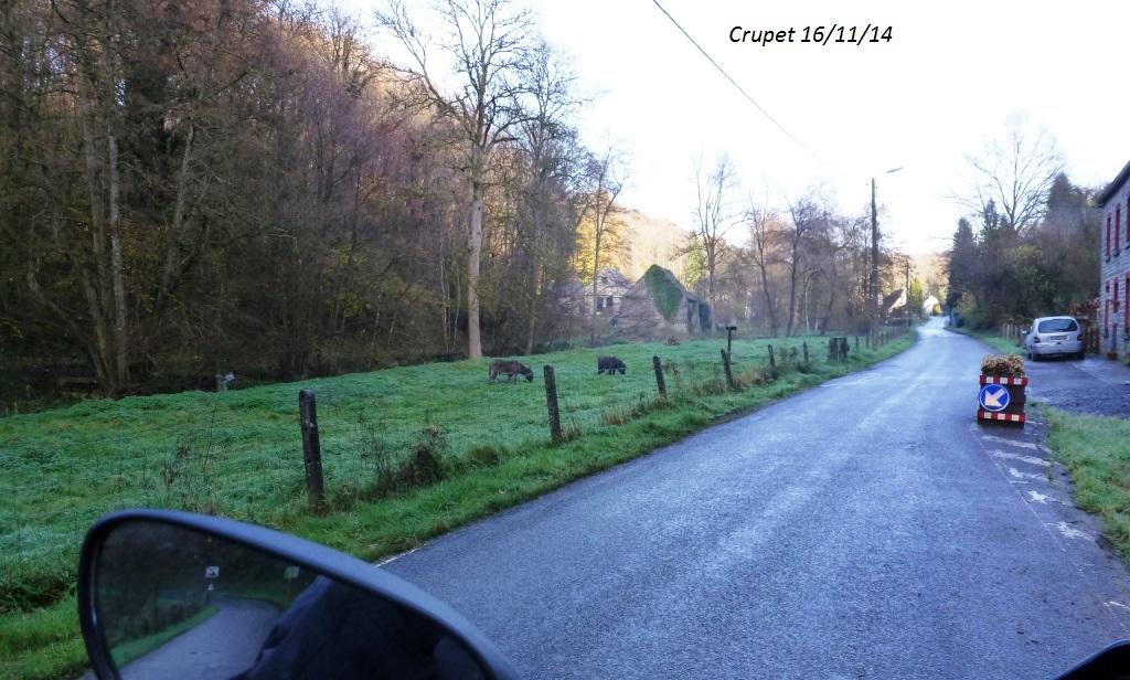 CR imagé de la balade du 16/11/14 autour de Dinant 9856994278
