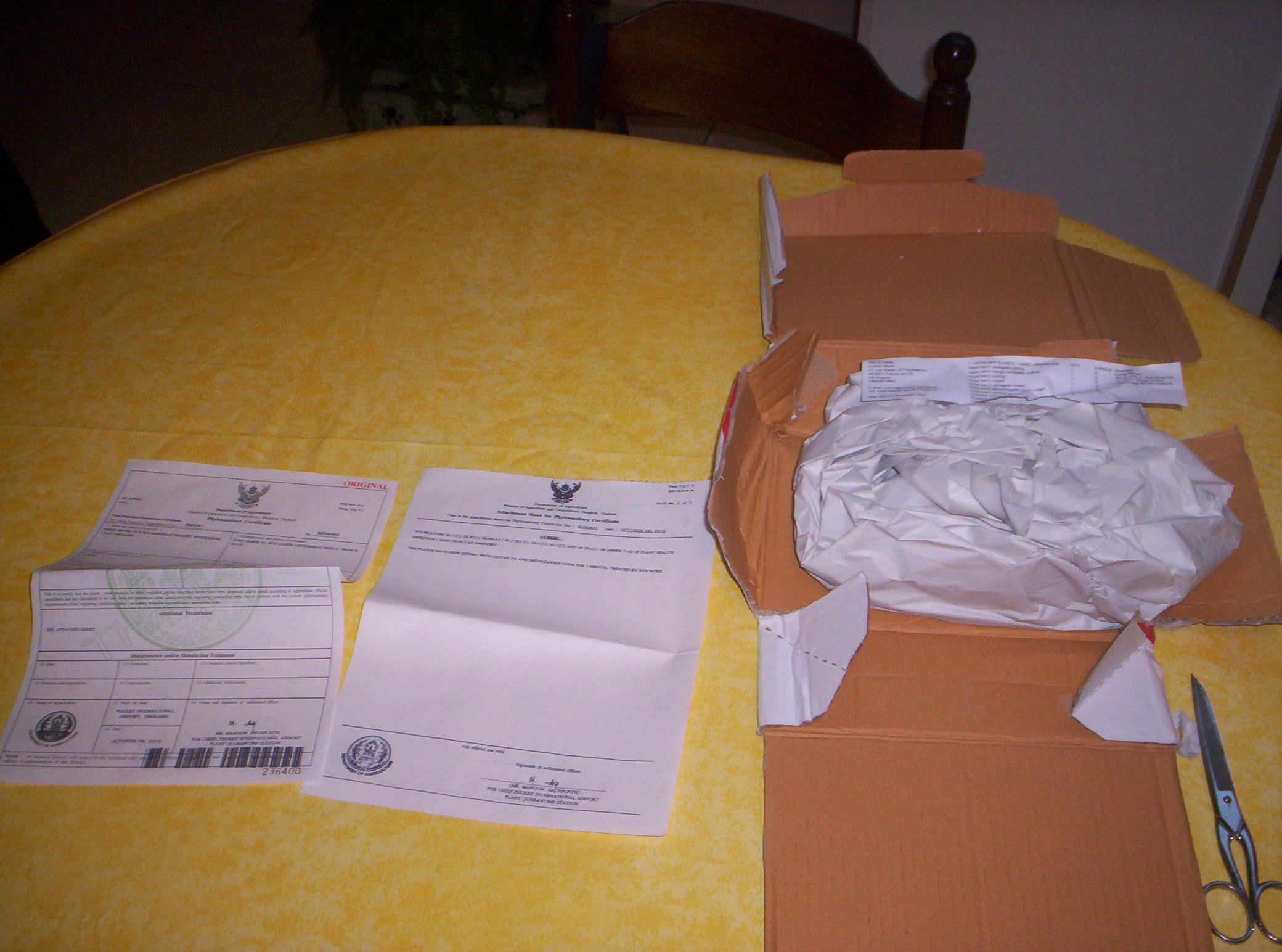 4 variétés de Hoya Kerii importés de thailande - Page 2 9898861000746