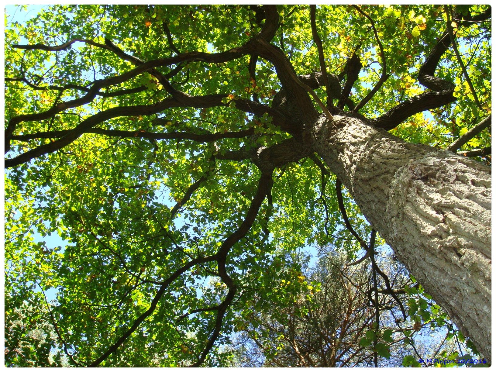 [fil ouvert] la forêt dans tous ses états - Page 6 990405DSC011081