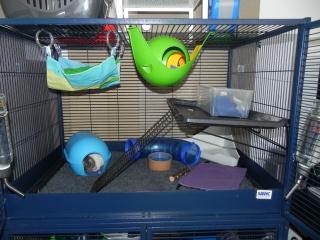 Photos de vos cages - Page 37 990856DSCN6591