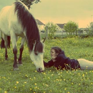 Présentez-nous vos chevaux ! <3 997617Te769quila21