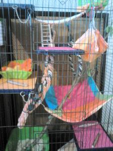 Aménagement nouvelle cage, besoin de vos avis Mini_131660DSC0140