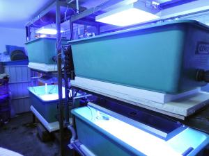 [HELP] Candy Corals recherche des souches pour ses expériences en labo Mini_154620fbkprotob6smal