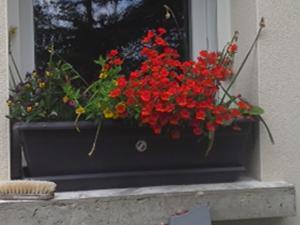 compos du printemps et clématite montana Mini_16916920140601125937