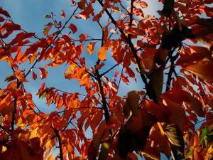 Thème du mois de Novembre : Les couleurs de l'Automne Mini_191297IMG05431webjpg