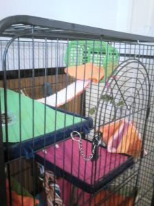 Aménagement nouvelle cage, besoin de vos avis Mini_207223DSC0142