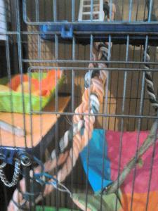 Aménagement nouvelle cage, besoin de vos avis Mini_218840DSC0146