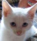 Un chaton du nom de Mirko  Mini_232761mirko