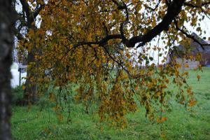 Thème du mois de Novembre : Les couleurs de l'Automne Mini_238078DSC3354JPG