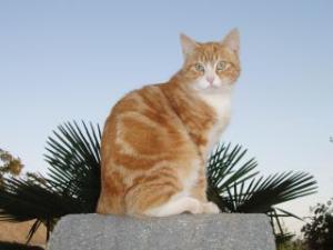 Les chats  Mini_242294P4220598