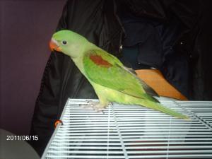 Mon bébé Grand alexandre Ruby !! Mini_242678IMAG0221