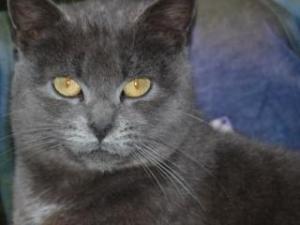 Les chats  Mini_299762P1000193