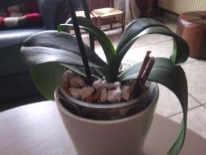 orchidée en détresse - Page 3 Mini_302241IMG20160306090434