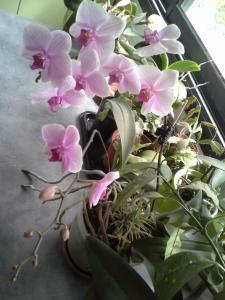 compos du printemps et clématite montana Mini_30506820140601125504
