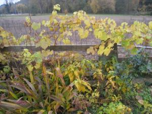 Thème du mois de Novembre : Les couleurs de l'Automne Mini_306072Photo006jpg