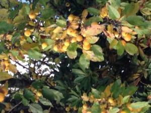 Apprendre à reconnaître les arbres Mini_324716183