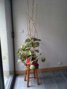 compos du printemps et clématite montana Mini_357004kerrii20140601125336
