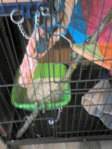 Aménagement nouvelle cage, besoin de vos avis Mini_358755DSC0147