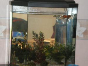 votre aquarium ou votre bassin Mini_390160IMGP0633