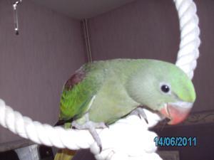 Mon bébé Grand alexandre Ruby !! Mini_420916PICT0223