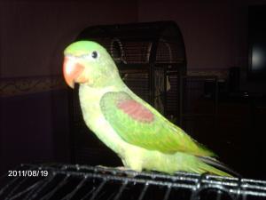 Mon bébé Grand alexandre Ruby !! - Page 3 Mini_423349IMAG0387