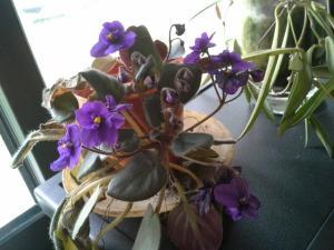 compos du printemps et clématite montana Mini_42588420140601125351