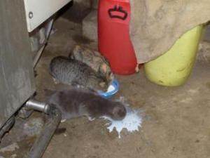 Les chats  Mini_466717P1030504